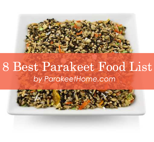 best parakeet food list