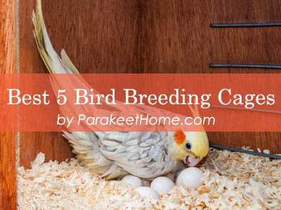 canary-bird-breeding-cages