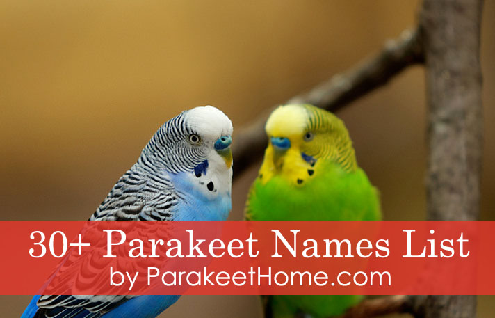 5 of the Best Parakeet Names for Your Male/Female Parakeet