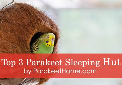 parakeet-sleeping-hut-bed