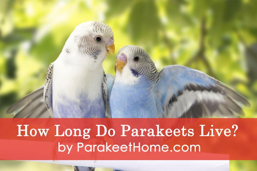 how long do parakeets live