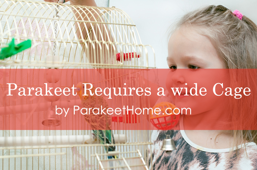 parakeet requires good cages