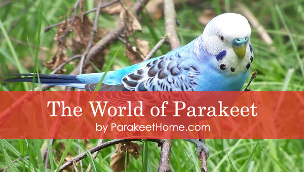 the world of parakeet