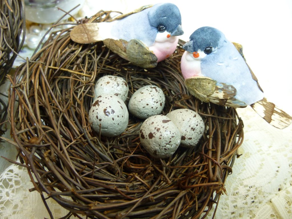 Parakeet Eggs – From Fertilization to Hatching Guide 2019