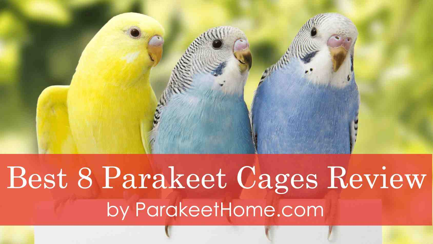 best-parakeet-cages-review