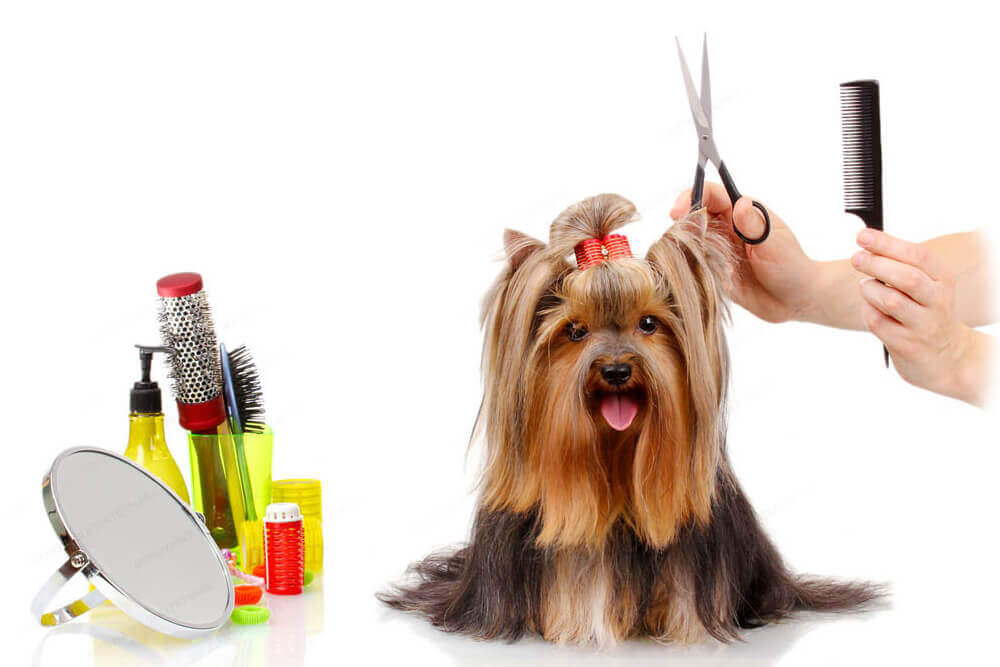 Six Reasons Why You Must Find The Best Dog Grooming Scissors